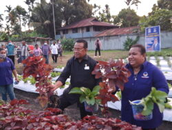 Kelompok Tani Perempuan Samaria Lakukan Panen Perdana Sayuran Organik