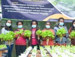 Berkebun Hidroponik Bantu Tingkatkan Kesejahteraan Mama Papua di Merauke